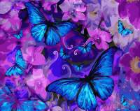 КАРТИНА ПО НОМЕРАМ. Синие бабочки /40х50/