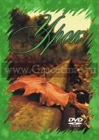 УРОК - 1 DVD