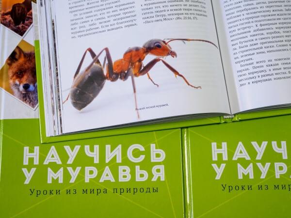 НАУЧИСЬ У МУРАВЬЯ. Уроки из мира природы. Сергей Хрибар